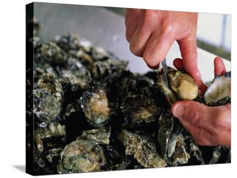 Shucking Oysters, Coffin Bay, Australia-John Hay-Stretched Canvas Print