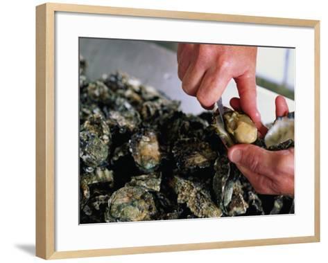 Shucking Oysters, Coffin Bay, Australia-John Hay-Framed Art Print