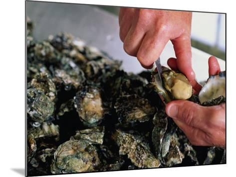 Shucking Oysters, Coffin Bay, Australia-John Hay-Mounted Photographic Print
