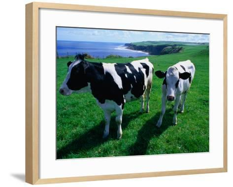 Cattle in Coastal Paddock Near Whitby, North York Moors National Park, England-Grant Dixon-Framed Art Print