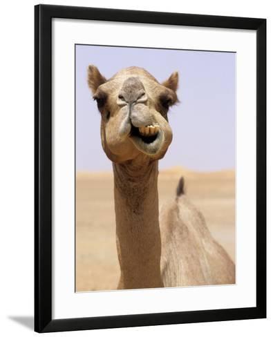 Cheeky Dubai Camel in Desert, Dubai, United Arab Emirates-Holger Leue-Framed Art Print