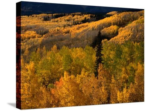 Autumn Colours of the Elk Mountains in Colorado, USA-Mark Newman-Stretched Canvas Print