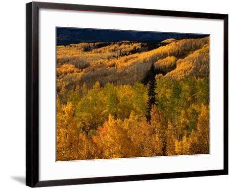 Autumn Colours of the Elk Mountains in Colorado, USA-Mark Newman-Framed Art Print