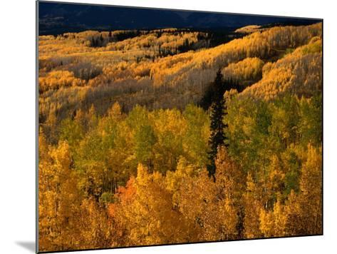 Autumn Colours of the Elk Mountains in Colorado, USA-Mark Newman-Mounted Photographic Print