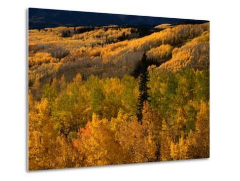 Autumn Colours of the Elk Mountains in Colorado, USA-Mark Newman-Metal Print