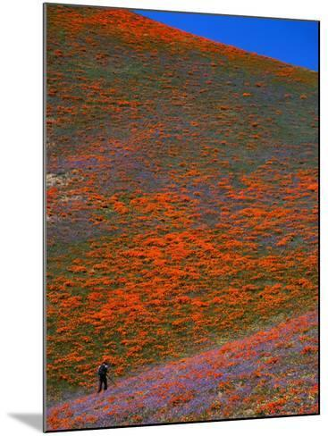 A Photographer Surrounded by California Poppies in the Hills of Gorman, California, USA-Jan Stromme-Mounted Photographic Print