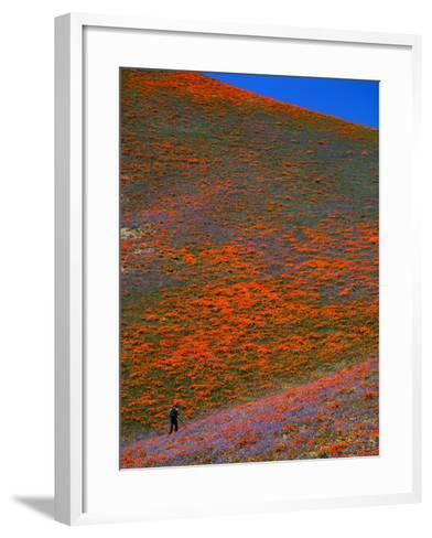A Photographer Surrounded by California Poppies in the Hills of Gorman, California, USA-Jan Stromme-Framed Art Print