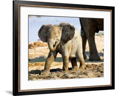Baby African Elephant in Mud, Namibia-Joe Restuccia III-Framed Art Print