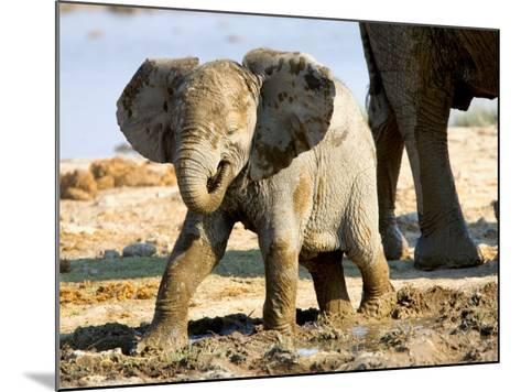 Baby African Elephant in Mud, Namibia-Joe Restuccia III-Mounted Photographic Print