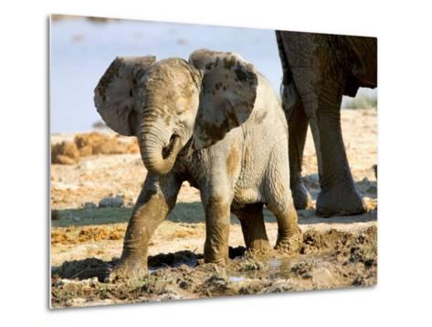 Baby African Elephant in Mud, Namibia-Joe Restuccia III-Metal Print