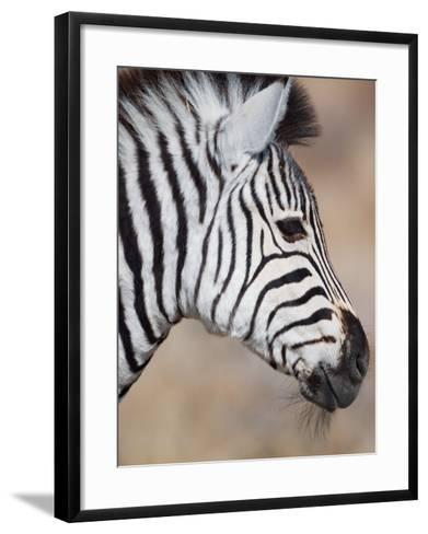 Burchell's Zebra, Etosha National Park, Namibia-Michele Westmorland-Framed Art Print