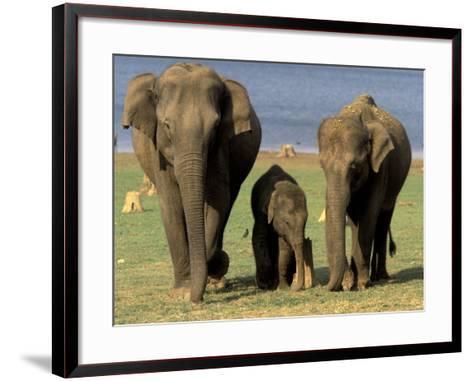 Asian Elephant Family, Nagarhole National Park, India-Gavriel Jecan-Framed Art Print