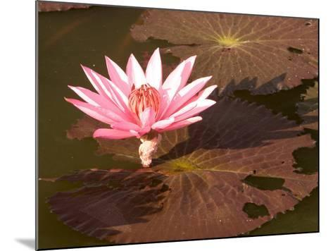 Lotus Flower in the Morning Light, Sukhothai, Thailand-Gavriel Jecan-Mounted Photographic Print