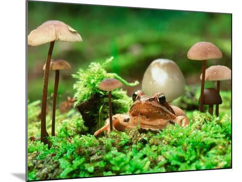 Small Toad Surrounded by Mushrooms, Jasmund National Park, Island of Ruegen, Germany-Christian Ziegler-Mounted Photographic Print