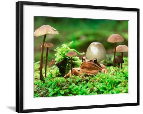 Small Toad Surrounded by Mushrooms, Jasmund National Park, Island of Ruegen, Germany-Christian Ziegler-Framed Art Print