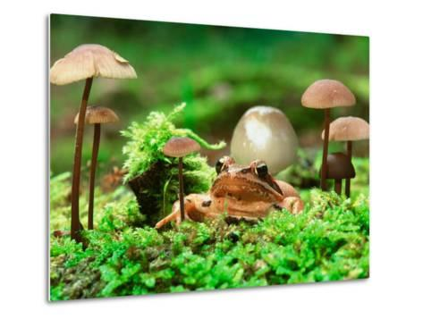 Small Toad Surrounded by Mushrooms, Jasmund National Park, Island of Ruegen, Germany-Christian Ziegler-Metal Print
