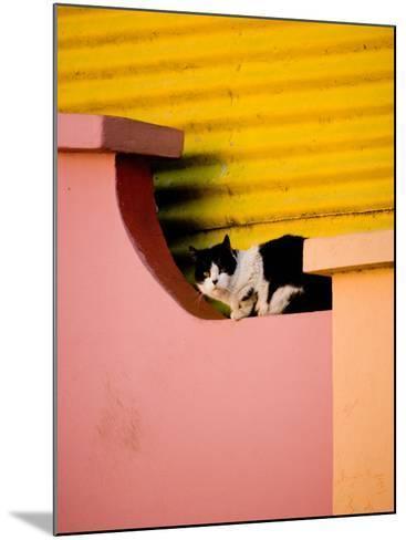 Caminito Avenue, La Boca District, Buenos Aires, Argentina-Stuart Westmoreland-Mounted Photographic Print