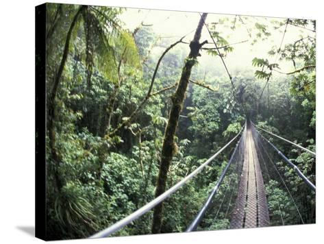 Sky Walk, Monteverde Cloud Forest, Costa Rica-Michele Westmorland-Stretched Canvas Print