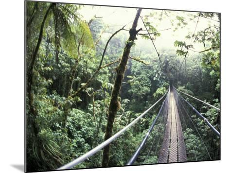 Sky Walk, Monteverde Cloud Forest, Costa Rica-Michele Westmorland-Mounted Photographic Print