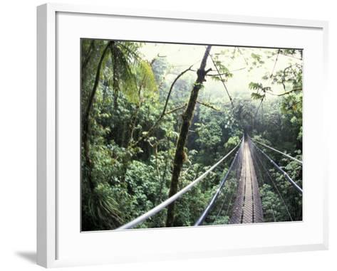 Sky Walk, Monteverde Cloud Forest, Costa Rica-Michele Westmorland-Framed Art Print