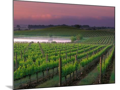 Sunrise in Distant Fog, Carnaros, Napa Valley, California, USA-Janis Miglavs-Mounted Photographic Print