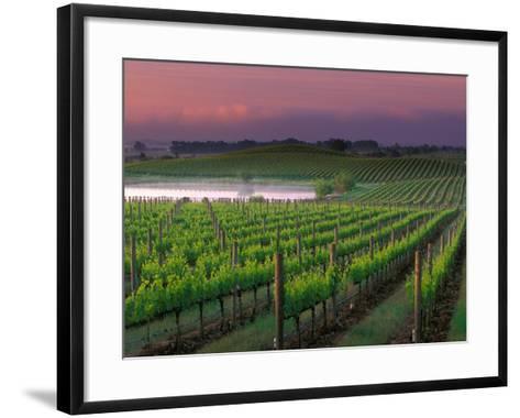Sunrise in Distant Fog, Carnaros, Napa Valley, California, USA-Janis Miglavs-Framed Art Print