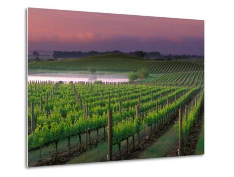 Sunrise in Distant Fog, Carnaros, Napa Valley, California, USA-Janis Miglavs-Metal Print