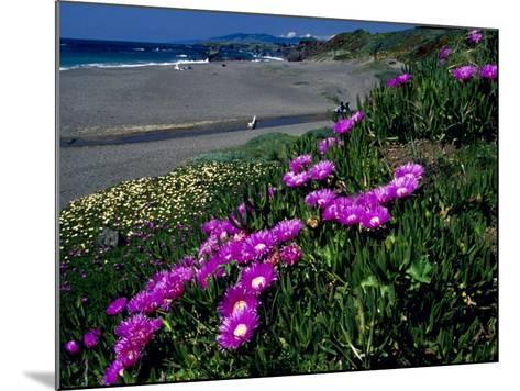 Ice Plant on California Coastline, USA-Terry Eggers-Mounted Photographic Print