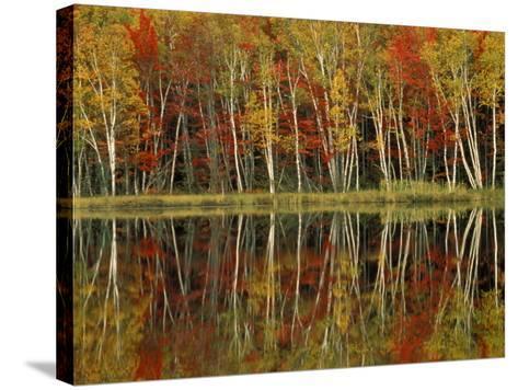 Fall Foliage and Birch Reflections, Hiawatha National Forest, Michigan, USA-Claudia Adams-Stretched Canvas Print