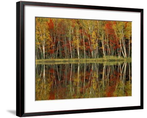 Fall Foliage and Birch Reflections, Hiawatha National Forest, Michigan, USA-Claudia Adams-Framed Art Print