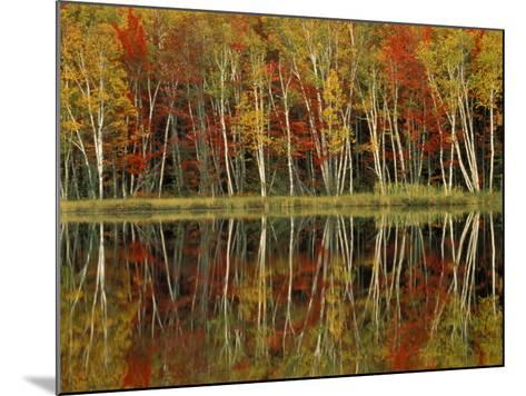 Fall Foliage and Birch Reflections, Hiawatha National Forest, Michigan, USA-Claudia Adams-Mounted Photographic Print