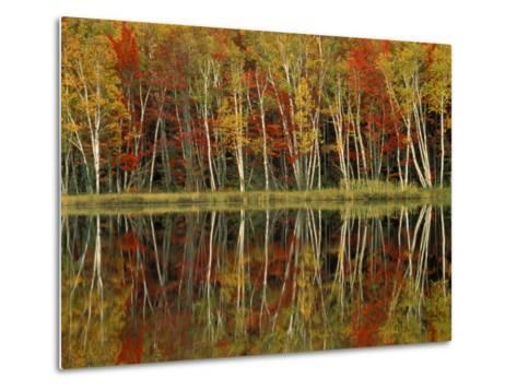 Fall Foliage and Birch Reflections, Hiawatha National Forest, Michigan, USA-Claudia Adams-Metal Print