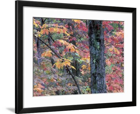 Forest Landscape and Fall Colors on Deciduous Trees, Lake Superior National Forest, Minnesota, USA-Gavriel Jecan-Framed Art Print