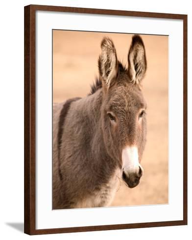 Philmont Scout Ranch Museum Burro, Cimarron, New Mexico, USA-Walter Bibikow-Framed Art Print