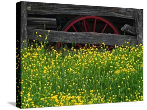 Buttercups and Wagon Wheel, Pioneer Homestead, Great Smoky Mountains National Park, North Carolina-Adam Jones-Stretched Canvas Print