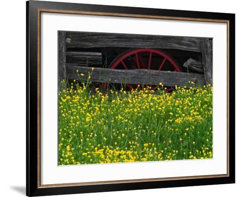 Buttercups and Wagon Wheel, Pioneer Homestead, Great Smoky Mountains National Park, North Carolina-Adam Jones-Framed Art Print
