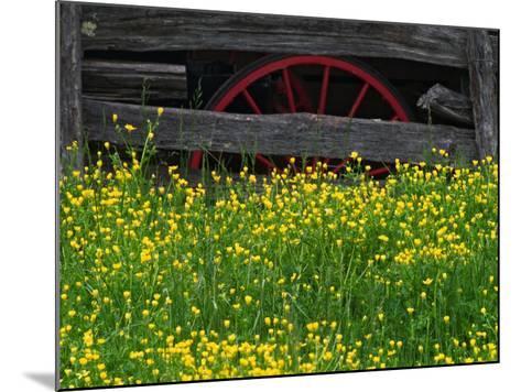 Buttercups and Wagon Wheel, Pioneer Homestead, Great Smoky Mountains National Park, North Carolina-Adam Jones-Mounted Photographic Print