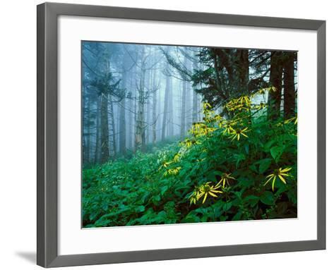 Golden-Glow Flowers, Great Smoky Mountains National Park, North Carolina, USA-Adam Jones-Framed Art Print