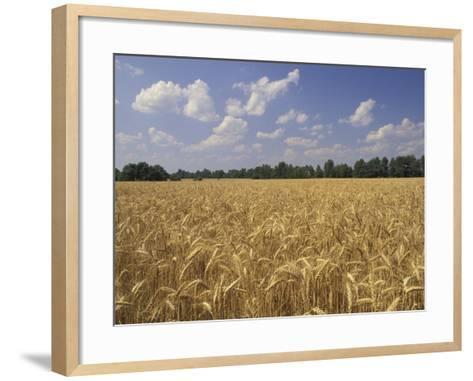 Wheat Crop, Tennessee, USA-Adam Jones-Framed Art Print
