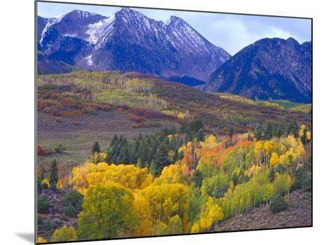 Colorful Aspens in Logan Canyon, Utah, USA-Julie Eggers-Mounted Photographic Print