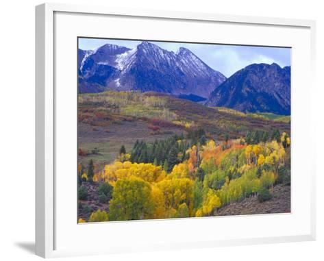 Colorful Aspens in Logan Canyon, Utah, USA-Julie Eggers-Framed Art Print