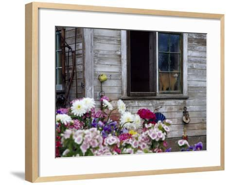Old Barn with Cat in the Window, Whitman County, Washington, USA-Julie Eggers-Framed Art Print