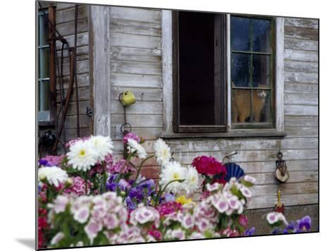 Old Barn with Cat in the Window, Whitman County, Washington, USA-Julie Eggers-Mounted Photographic Print