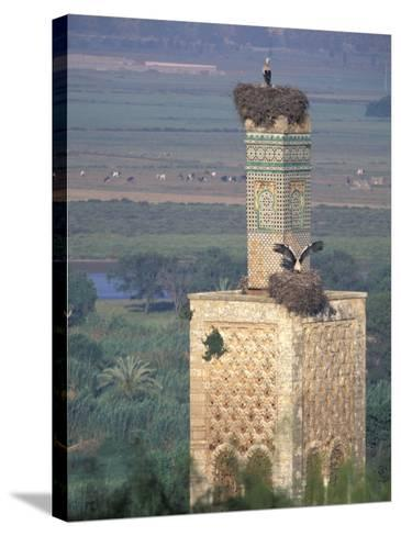 Tower With Birds and Bird Nests, Morocco-John & Lisa Merrill-Stretched Canvas Print