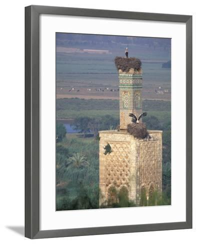 Tower With Birds and Bird Nests, Morocco-John & Lisa Merrill-Framed Art Print