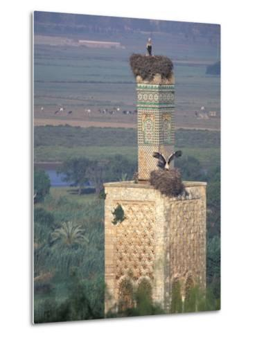 Tower With Birds and Bird Nests, Morocco-John & Lisa Merrill-Metal Print