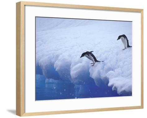 Adelie Penguins Dive from an Iceberg, Antarctica-Hugh Rose-Framed Art Print