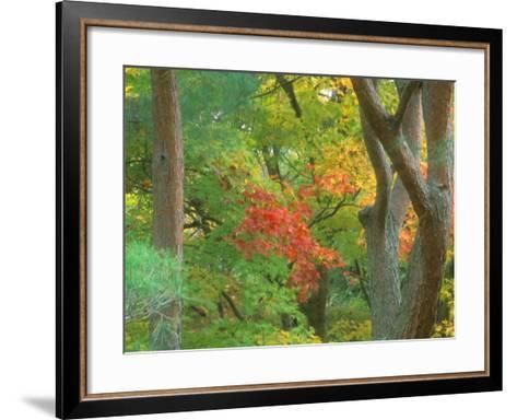 Okochi Sanso, Kyoto, Japan-Rob Tilley-Framed Art Print