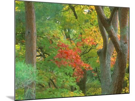 Okochi Sanso, Kyoto, Japan-Rob Tilley-Mounted Photographic Print