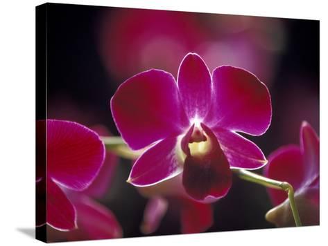 Taman Orchid, Kuala Lumpur, Malaysia-Michele Molinari-Stretched Canvas Print